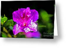 Lavendar Beauty Greeting Card