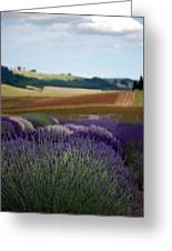 Lavendar Fields Forever Greeting Card by Mamie Gunning