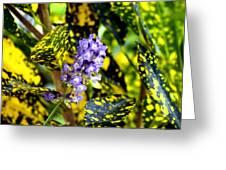 Lavendar Greeting Card