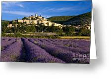 Lavender And Banon Greeting Card