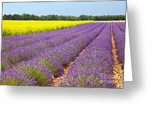 Lavender And Mustard Greeting Card