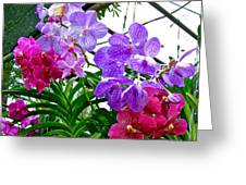 Lavender And Red Orchids At Maerim Orchid Farm In Chiang Mai-tha Greeting Card