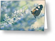 Lavender And The Butterfly Greeting Card