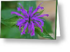 Lavender Bloom Greeting Card
