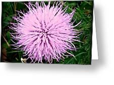 Lavender Bumble 2 Greeting Card