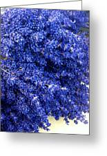 Lavender Bunch Flowers Greeting Card