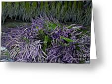Lavender Bundles Greeting Card