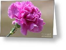 Lavender Carnation Greeting Card