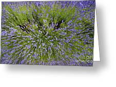Lavender Explosion Greeting Card by Tim Gainey