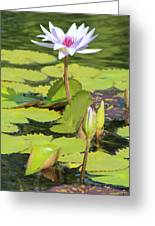 Lavender Flower On A Pond Greeting Card