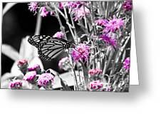 Lavender Flowers Greeting Card