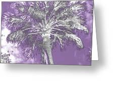 Lavender Glow Palm Tree Myakka River State Park Usa Greeting Card