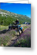 Lavender Harvest In Provence Greeting Card