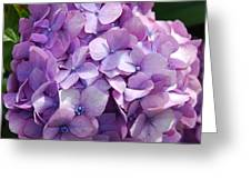 Lavender Hydrangea Greeting Card