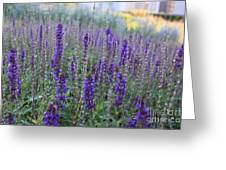 Lavender In The City Park Greeting Card