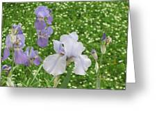 Lavender Iris Greeting Card