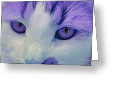 Lavender Kitten Greeting Card