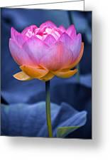 Lavender Lotus Greeting Card