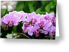 Lavender Lovelies Greeting Card