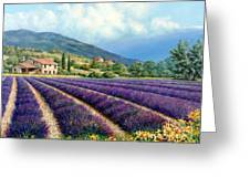 Lavender Greeting Card by Michael Swanson