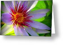 Lavender Passion Greeting Card