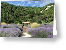Lavender Path Greeting Card