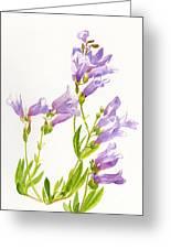 Lavender Penstemon Wildflowers Greeting Card