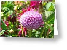 Lavender Purple Dahlia Flowers Art Prints Greeting Card