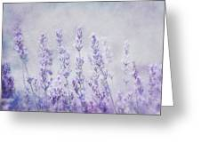 Lavender Romance Greeting Card