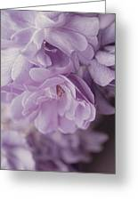 Lavender Purple Roses Rhapsody Greeting Card