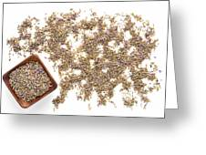 Lavender Seeds Greeting Card