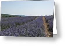 Lavender Sky Greeting Card
