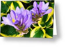 Lavender Spring Flowers Greeting Card