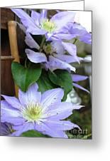 Lavender Star Greeting Card