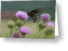 Lavender Thistle And Pipevine Swallowtail Butterfly Greeting Card