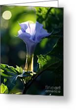 Lavender Trumpet Flower Greeting Card
