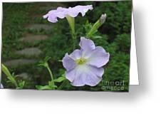 Lavender Whisper Greeting Card