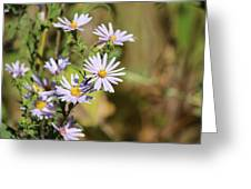 Lavender Wild Flowers Greeting Card