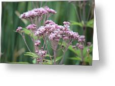 Lavender Wildflower Greeting Card