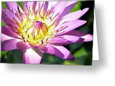 Lavillita Flower 10117 Greeting Card