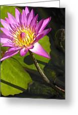 Lavillita_flower 10116 Greeting Card