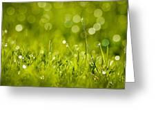 Lawn Twinklers Greeting Card