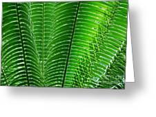 Layered Ferns I Greeting Card
