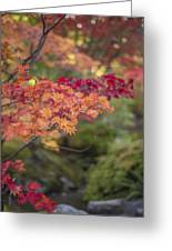 Layers Of Autumn Red Greeting Card