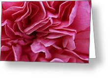 Layers Of Pink Greeting Card