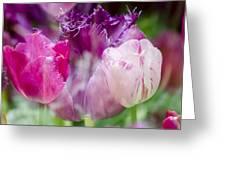 Layers Of Tulips II Greeting Card