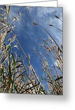 Laying In A Feild Looking Up Greeting Card