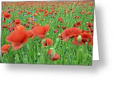 Laying In The Poppy Field Greeting Card