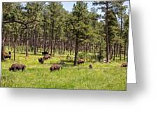 Lazily Grazing Bison Greeting Card