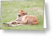 Lazy Bison Calf Or Red Dog Greeting Card
